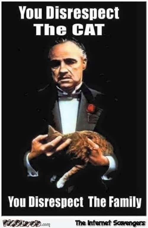 godfather disrespect the cat meme