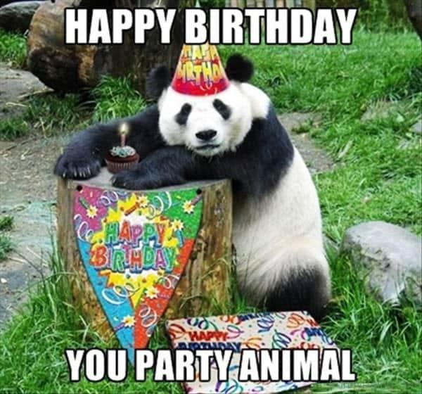 happy birthday wine party animal meme