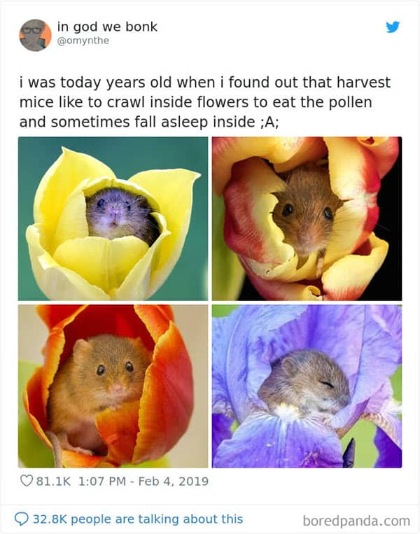 i was today years old harvest mice memes