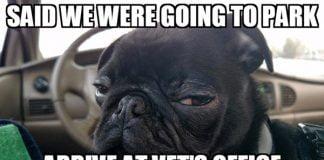 side eye vet memes