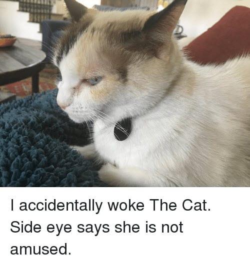 side eye woke the cat memes