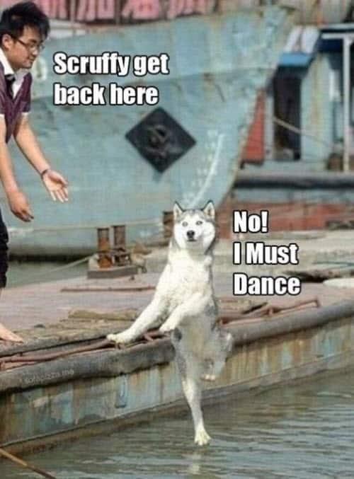 happy must dance meme