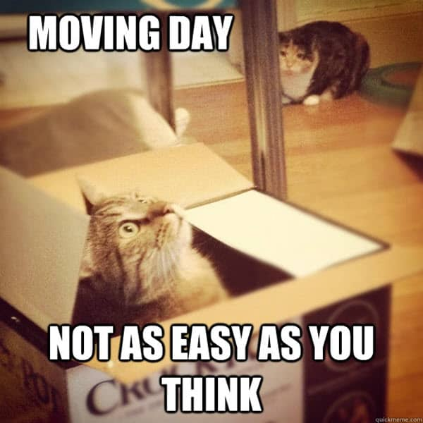 moving day meme