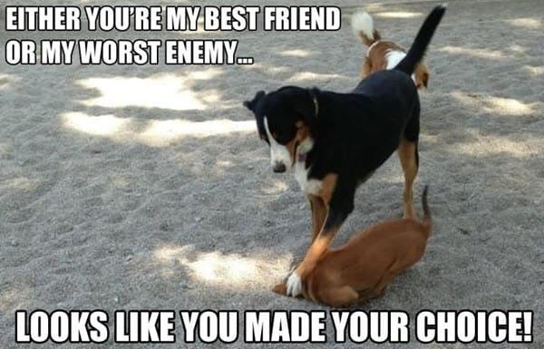 bad friend or enemy meme