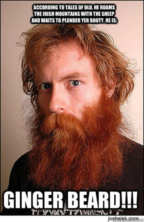 ginger beard meme