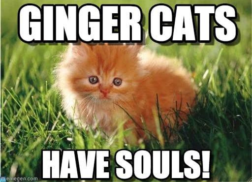 ginger cats meme