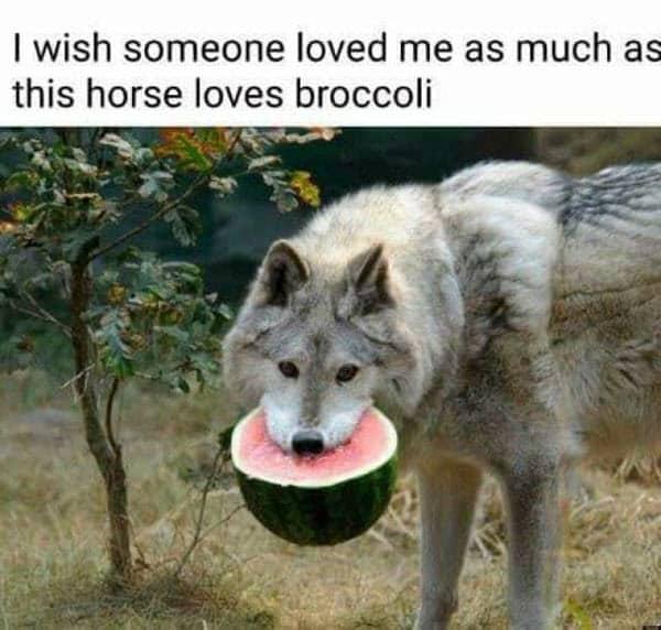 stupid horse memes