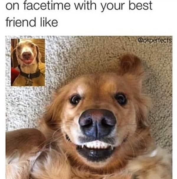 best friend facetime memes