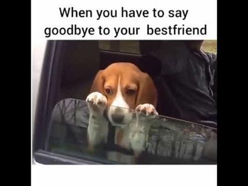 best friend say goodbye memes