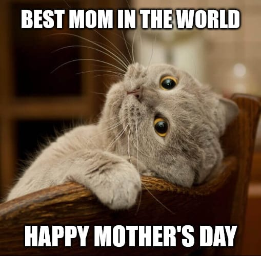 happy mothers day best mom in the world meme