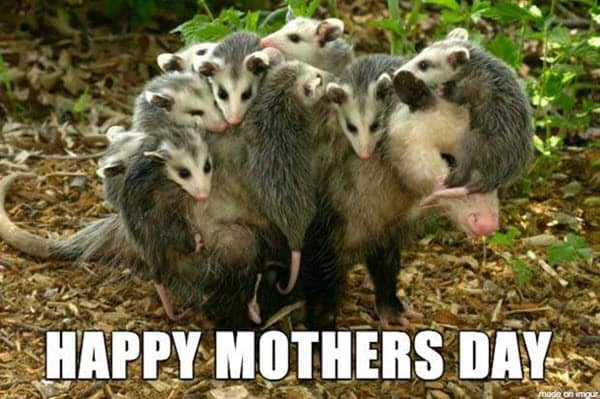 happy mothers day memes