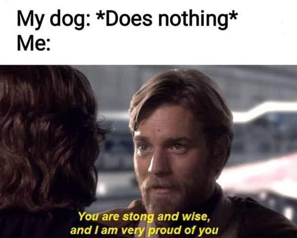 proud of you dog meme
