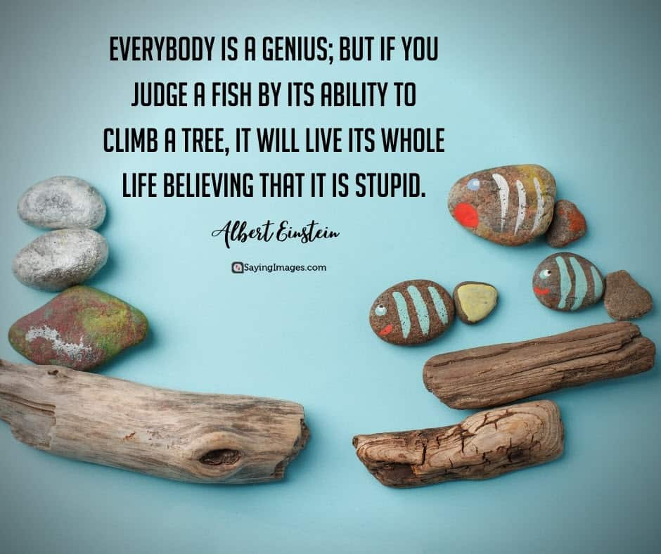 education stupid quotes