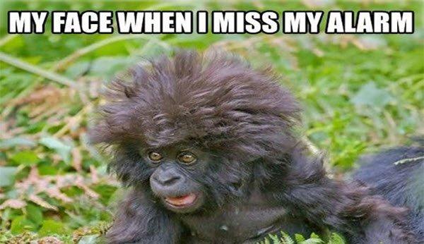 funny monkey alarm memes