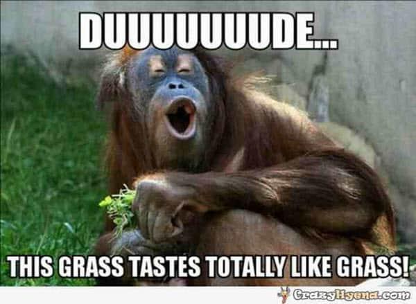 funny monkey dude memes
