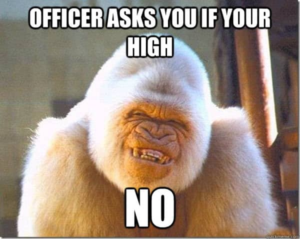 funny monkey high memes