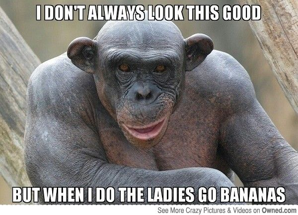 funny monkey i dont always look good memes
