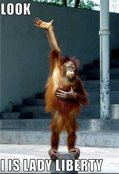 funny monkey look memes