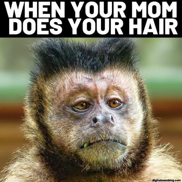 funny monkey mom hair memes