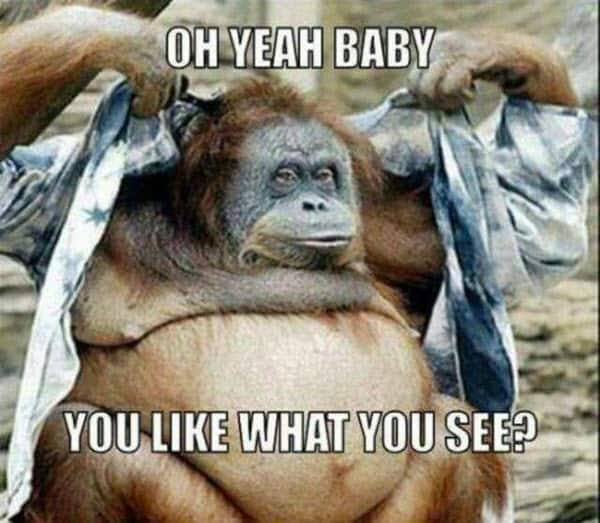 funny monkey oh yeah baby memes
