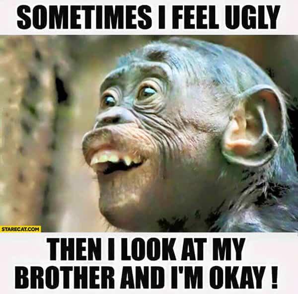 funny monkey sometimes i feel ugly memes