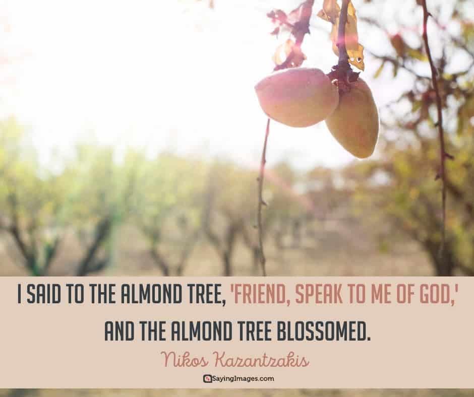 tree blossom quotes