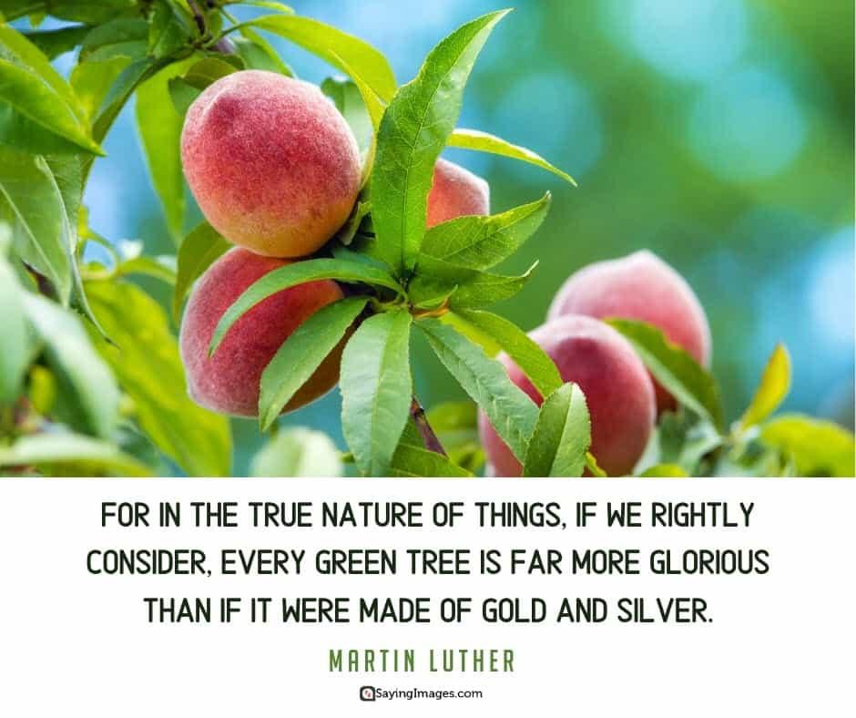 tree nature quotes