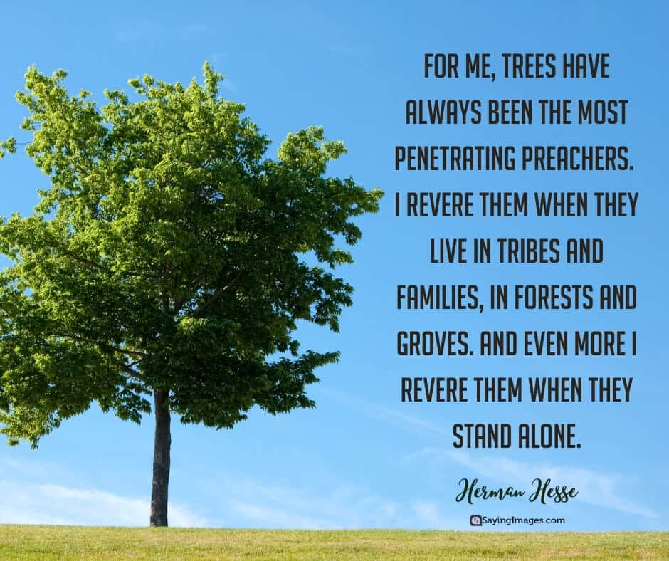 tree stand quotes