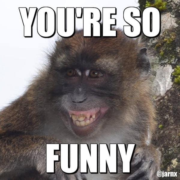 youre so funny monkey memes