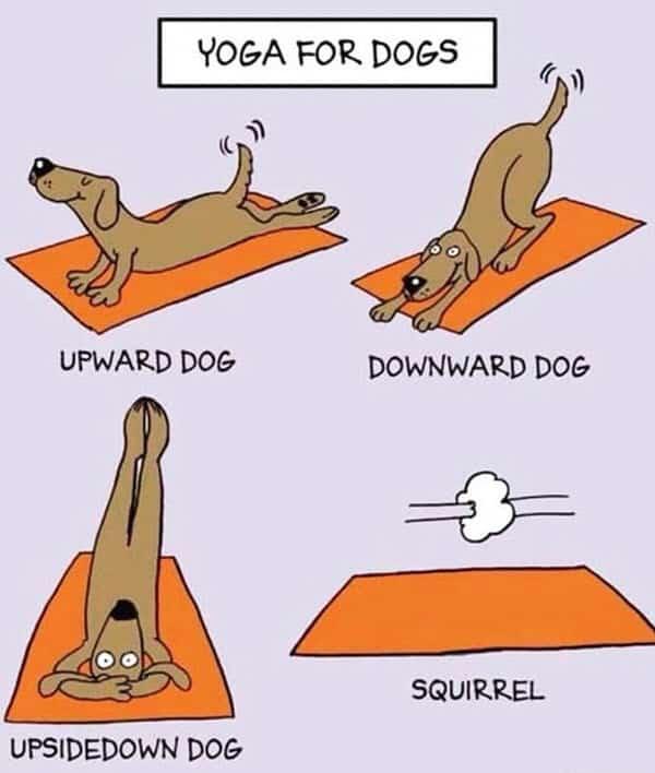yoga for dogs memes