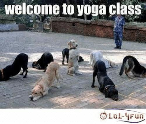 yoga welcome memes