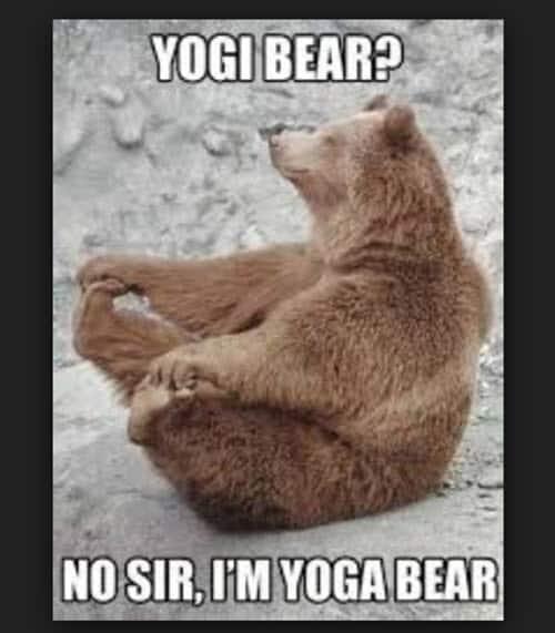 yoga yoga bear memes