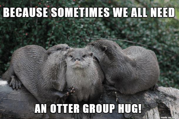 An otter group hug Otter Meme