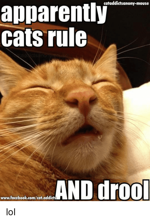 Apparently cats rule Drooling Meme