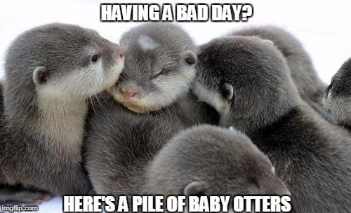 Having a bad day Otter Meme