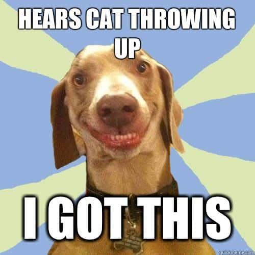 Hears a cat throwing up Vomit Meme