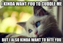 cuddle meme