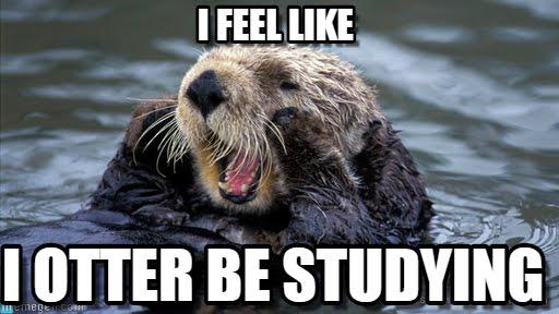 I feel like Otter Meme