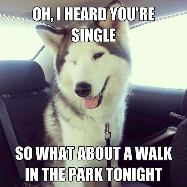 I heard your single Flirty Meme
