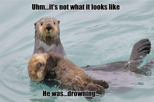 Its not like what it looks like Otter Meme