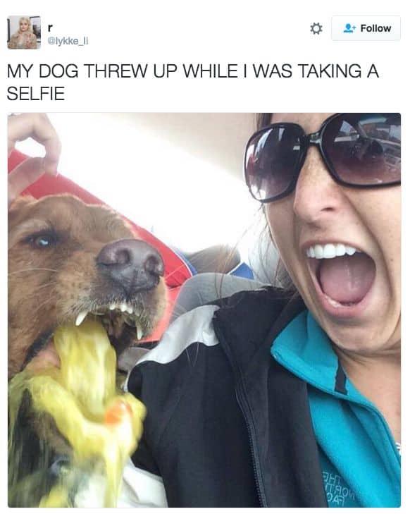 My dog throw up Vomit Meme