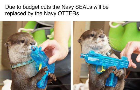 Navy Otter Meme