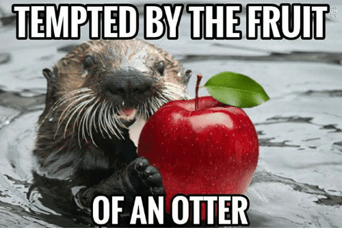 Tempted by the fruit Otter Meme