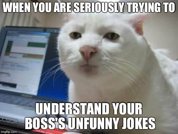 Trying to understand boss Not funny Meme