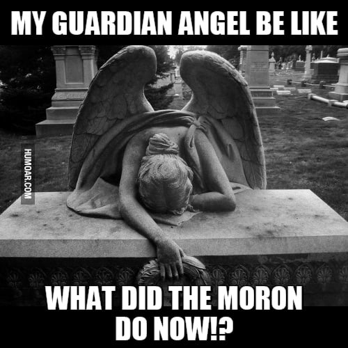 What did that moron do Angel Meme