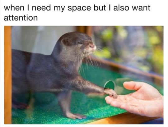When i need space Otter Meme