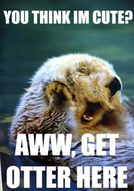 You think i'm cute Otter Meme