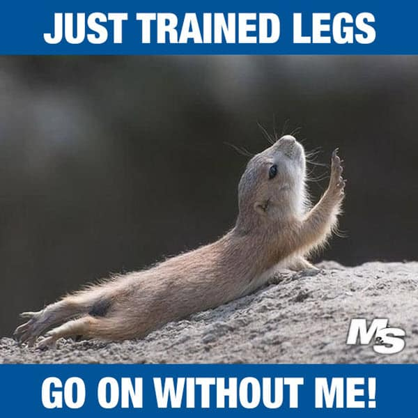 after leg day just trained legs meme