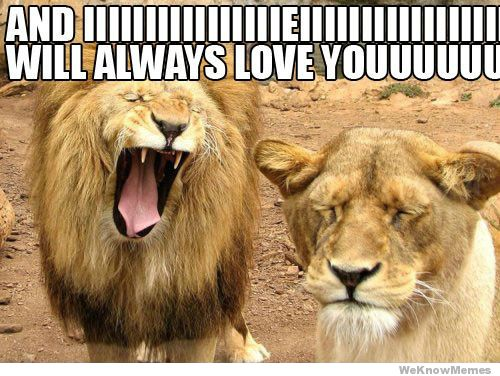 40 Funny I Love You Meme Sayingimagescom