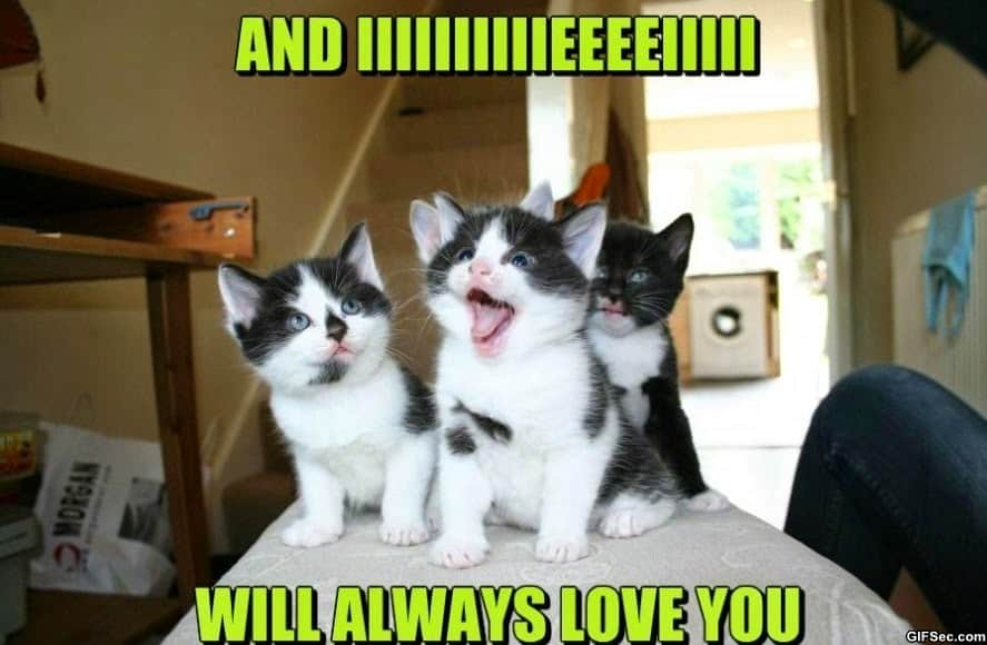 Love You Memes Funny : Funny love memes have a beautiful day baby i love you more than i